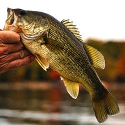 Fishing lake wallenpaupack pennsylvania for Lake wallenpaupack fishing