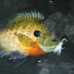 Fishing lake ray hubbard fishing texas usa southwest channel cats largemouth bass and white crappie grow faster in ray hubbard than any other lake in the state contains black bass too publicscrutiny Images